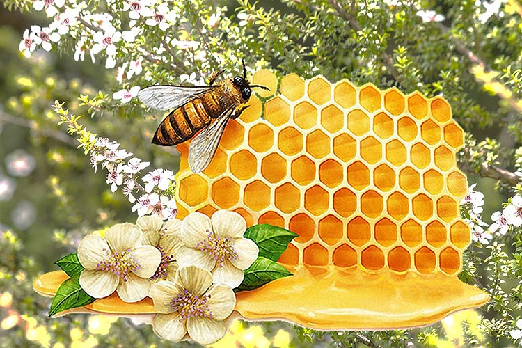 The healing and pain-relieving effects of manuka honey